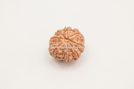 Eight Mukhi 100% Purified Small Rudraksha Everest Beads