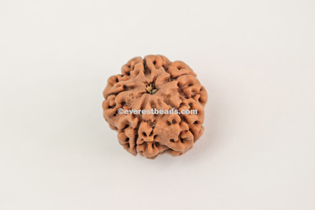 Five Mukhi Everest Beads