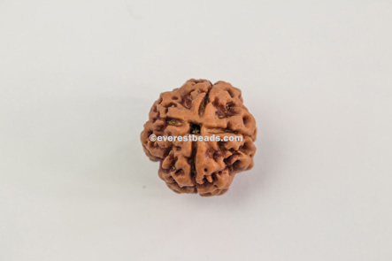 Four Mukhi Small Rudraksha Everest Beads